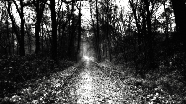Dark road through trees