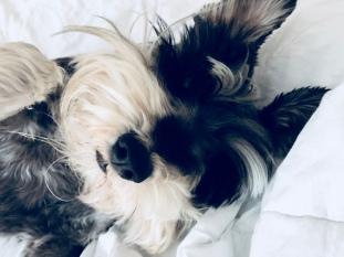 Good morning Henry