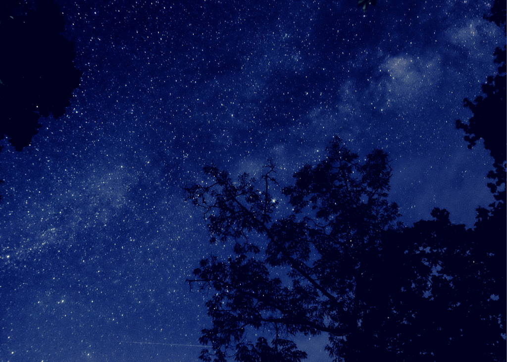 Night sky in woods